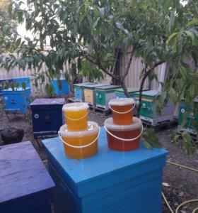 Мёд урожай 2017г