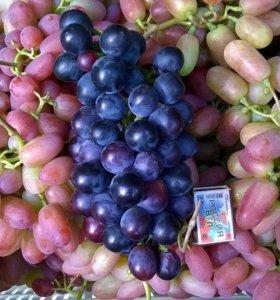 Саженцы виноград