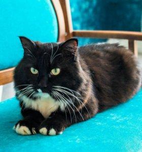 Классный, добрый, ласковый кот Морис, 3-5 лет