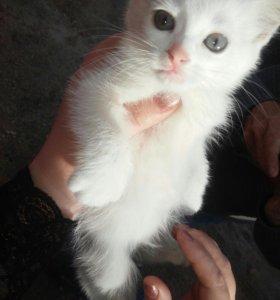 Беленький котенок