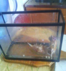 Черепаха с аквариум