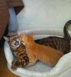 Зооняня. Домашняя передержка кошек.