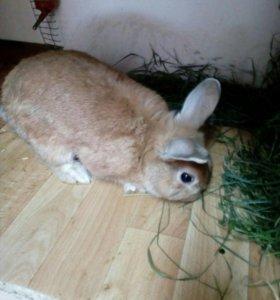Декоративный крол для вязки