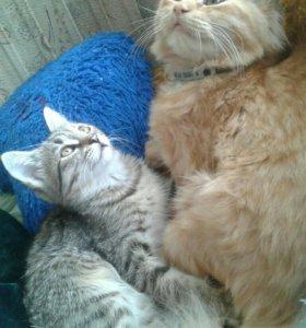 Кот и кошка бесплатно