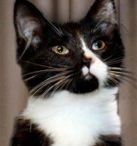 Игривый котенок  в самые лучшие и заботливые руки!