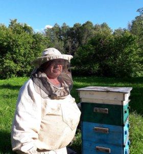 Натуральный мед 2017 года с личной пасеки.