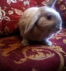Ласковый кролик+клетка