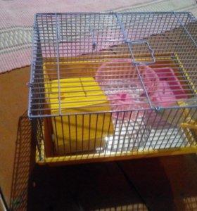 Клетка для хомяка, джунгарика