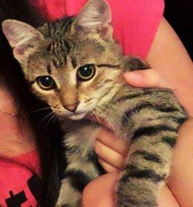 Кошечка в добрые руки желательно в частный дом