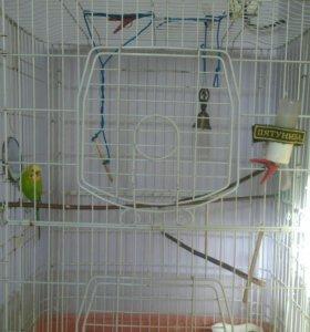 Клетка для свинки попугай в подарок