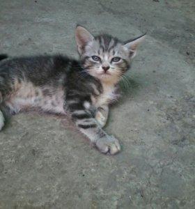 Милые и нежные котята)))
