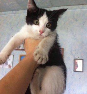 Кошечка в любящие руки