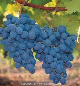 Виноград В|/| |-|0