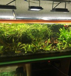 Растения для аквариума. Прополка свежая.