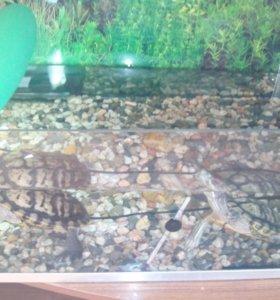 Аквариум с черепахами.