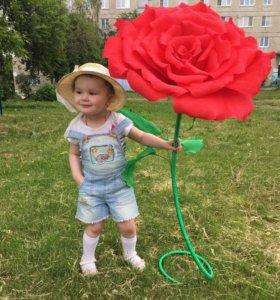 Ростовая напольная роза 1 м в высоту и 50 см бутон