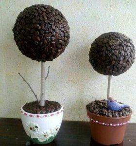 Продам кофейные деревья