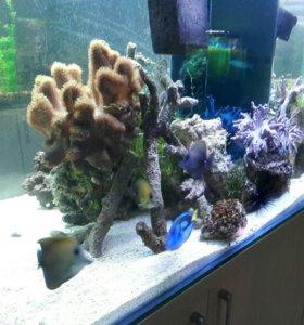 Морской аквариум домой