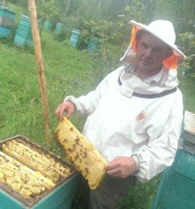 Продам мёд с собственной пасеки Алтайского края