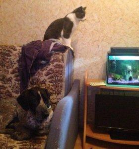 Зоогостиница, домашняя передержка животных