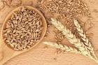 пшеница урожай 2017 года