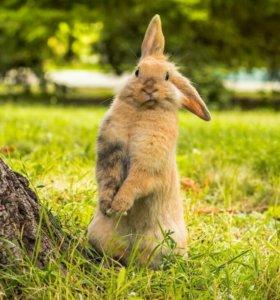 Кролики (4шт)