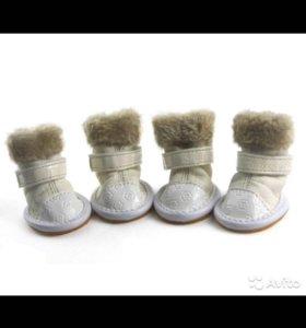 Обувь для собак мелких пород
