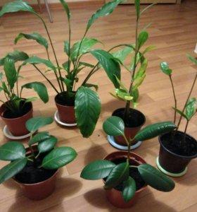 Продам или обменяю комнатные растения.