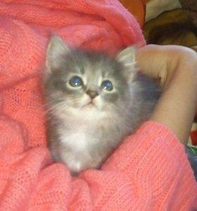 Котенок - девочка