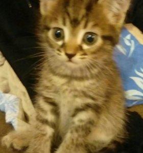 Кошечку 2 месяца