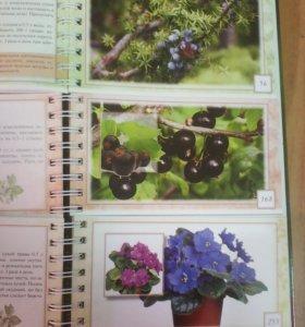 Энциклопедия лекарственных растений