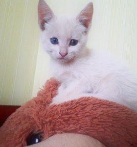 Милые котята  срочно нуждаются в хозяевах