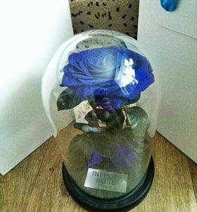 Роза в колбе Пенза