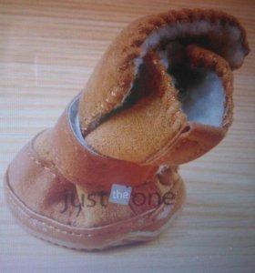 Обувь для Йорков
