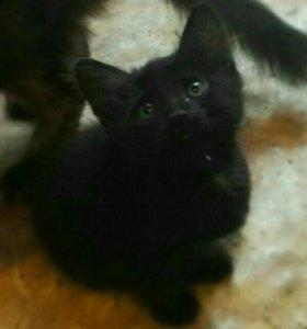 Котенок в добрые руки:)