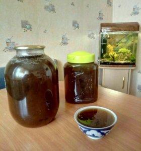 Натуральный мёд 🍯 со своей пасике.