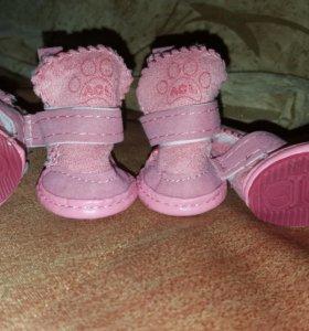 Ботинки (обувь)