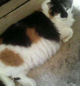 Кошка шар
