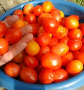 Продам помидоры черри для засолки.