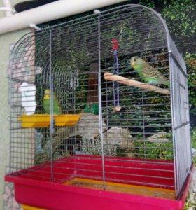 Волнистые папугайчики