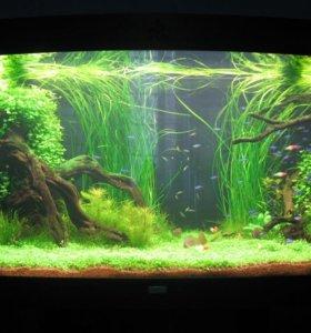Оформление и обслуживание аквариумов.