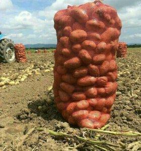 Продаём картофель отличного качества.