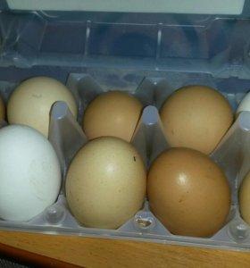 Продам яйцо куриное домашнее