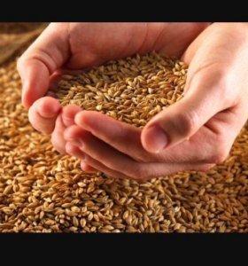 Рис отходы,пшеница,пшеничные отходы,ячневые отходы