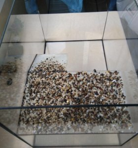 Террариум для черепашки