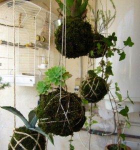 Садовник,биолог,специалист по уходу за растениями