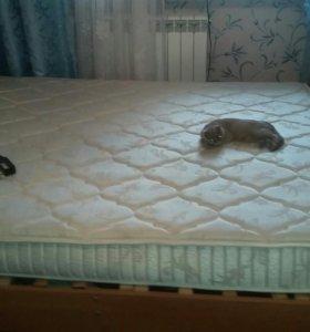 Продаю кровать с ортапедическим матрасом