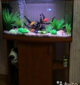 Продам аквариум 250 литров с тумбой(цвет орех)