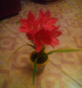 Цветок Дипиаструм,по другому Гладиолус.
