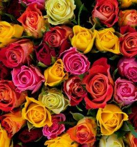 Розы, букеты роз,доставка,оптом,цветы